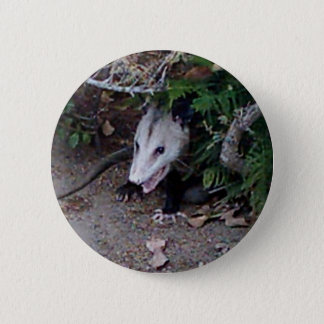 Wild Possum 6 Cm Round Badge