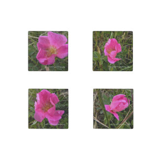 Wild Prairie Rose set of 4 Magnets