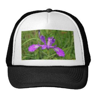 Wild Purple Iris Trucker Hat