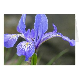 Wild Purple Iris Greeting Card