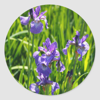 Wild Purple Iris Digital Photograph Sticker