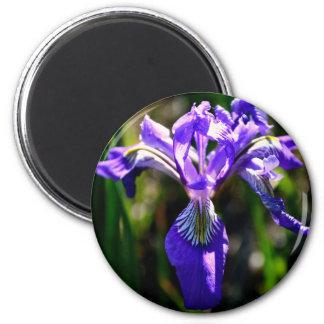 Wild Purple Iris magnet