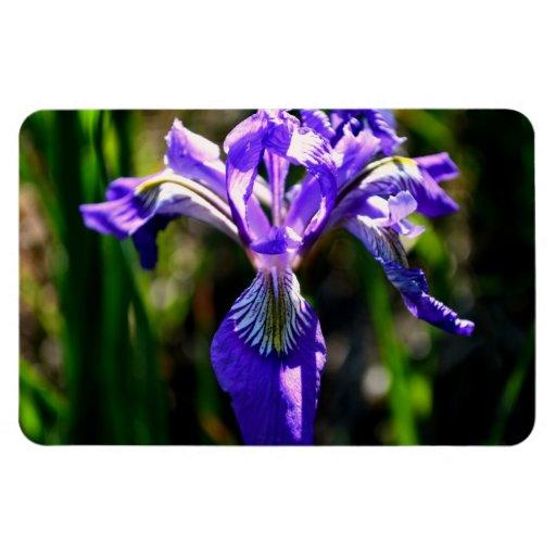 Wild Purple Iris Rectangle Magnet