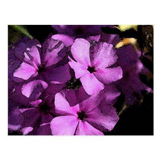 Wild Purple Phlox from scene in South Texas Postcard