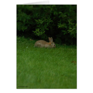 Wild Rabbit - Card