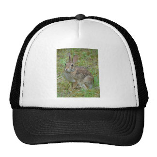 Wild Rabbit Eastern Cottontail Apparel and Gifts Cap