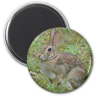 Wild Rabbit Eastern Cottontail II Apparel & Gifts 6 Cm Round Magnet