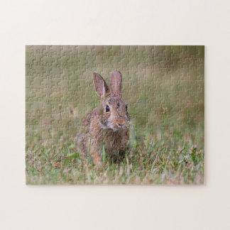 Wild rabbit jigsaw puzzle