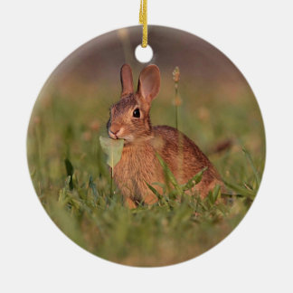 Wild Rabbit Round Ceramic Decoration