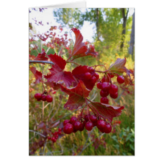 Wild Red Berries Greeting Card
