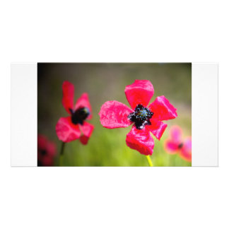 Wild Red Poppies Photo Card