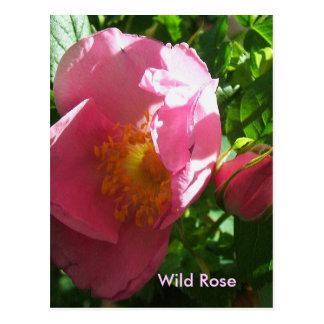 Wild Rose and Rose Bud Postcard