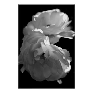 Wild Roses Black and White Floral Photography Poster