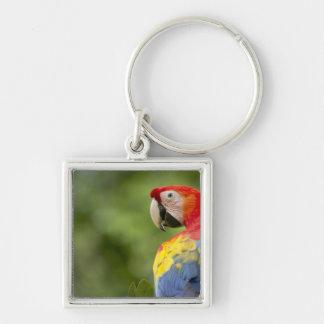 Wild scarlet macaw, rainforest, Costa Rica Key Ring