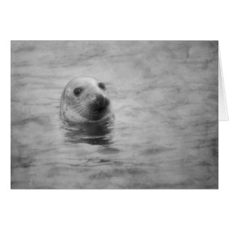 Wild Seal black and white Card