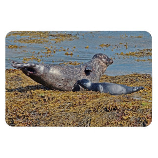 Wild Seal with Pup Animal Scottish Highlands Magnet