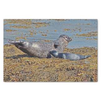 Wild Seal with Pup Animal Scottish Highlands Tissue Paper