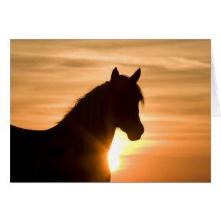 Wild Silhouette Wild Horse Greeting Card