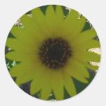 Wild Sunflower Classic Round Sticker