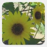 Wild Sunflowers Square Sticker