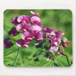 Wild Sweet-pea Flower