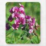 Wild Sweet-pea Flower Mousepads