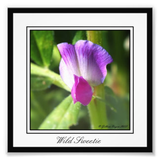 Wild Sweetie Photo Print