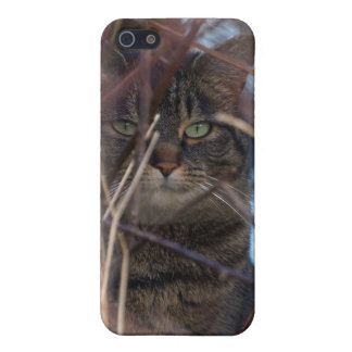 Wild Tabby Cat Animal iPhone Case iPhone 5/5S Cover