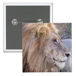 WILD THING - LION BUTTON