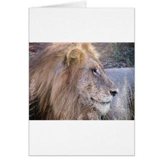 WILD THING - LION CARD