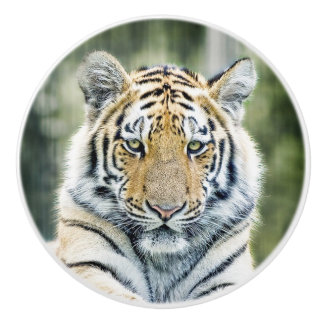Wild Tiger Nature Knob