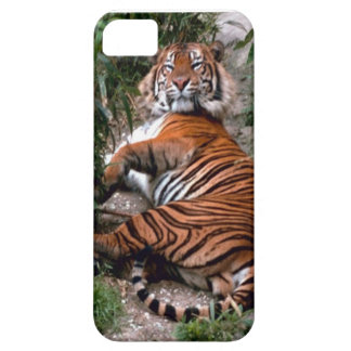 Wild Tiger Print collection iPhone 5 Cases