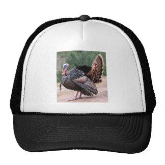Wild Turkey Cap