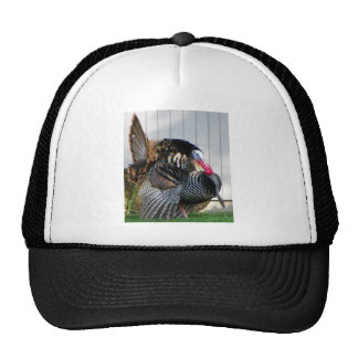 wild turkey trucker hats