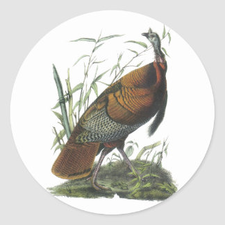 Wild Turkey, John Audubon Round Sticker
