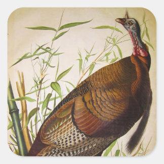 Wild Turkey, John James Audubon Square Sticker