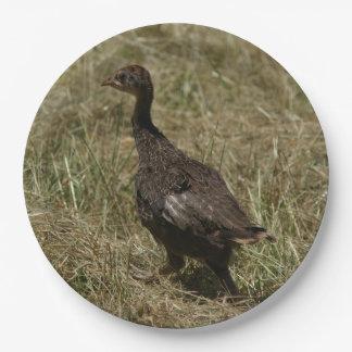 Wild Turkey, Paper Plates, 9 Inch Paper Plate