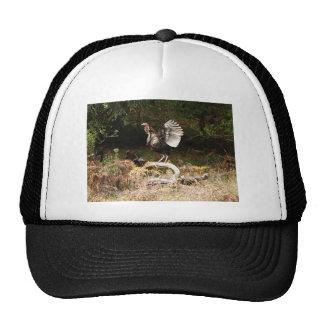 Wild Turkeys Mesh Hats