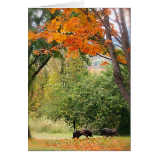 Wild Turkeys in Vermont Card