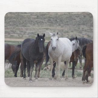Wild Utah Mustangs Mouse Pad