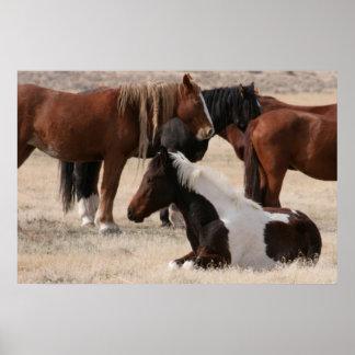 Wild Utah Mustangs Posters