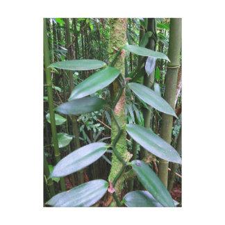 Wild Vanilla Orchid Canvas Print