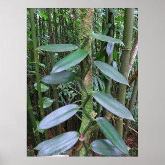 Wild Vanilla Orchid Poster