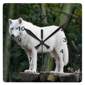 Wild White Wolf Square Wall Clock