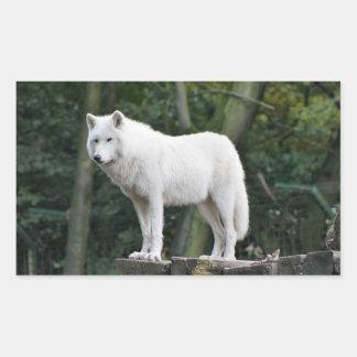 Wild White Wolf Sticker