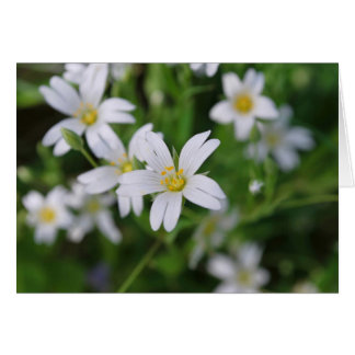 Wild woodland flowers card