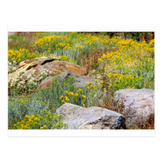 Wild Woodland Postcard