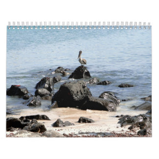 wild world of the Galapagos Wall Calendars
