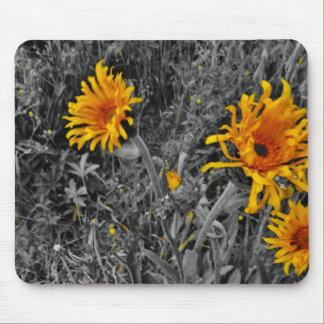 wild yellow cornflowers sepia tone , mouse pad