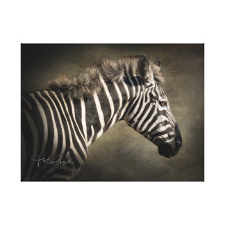 Wild Zebra Canvas Print